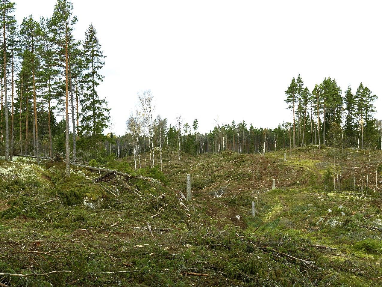 hur många träd finns det i sverige