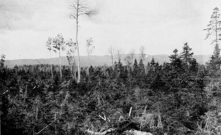 Så här kunde det mycket väl ha sett ut i i Mellansveriges järnbrukstäta bergsbygder på 1700-talet. Bilden togs i Ansjö kronopark i Jämtland 1922 där skogen avverkats och bara 80 till 100-åriga martallar lämnats. SLU, Skogsbibliotekets arkiv.