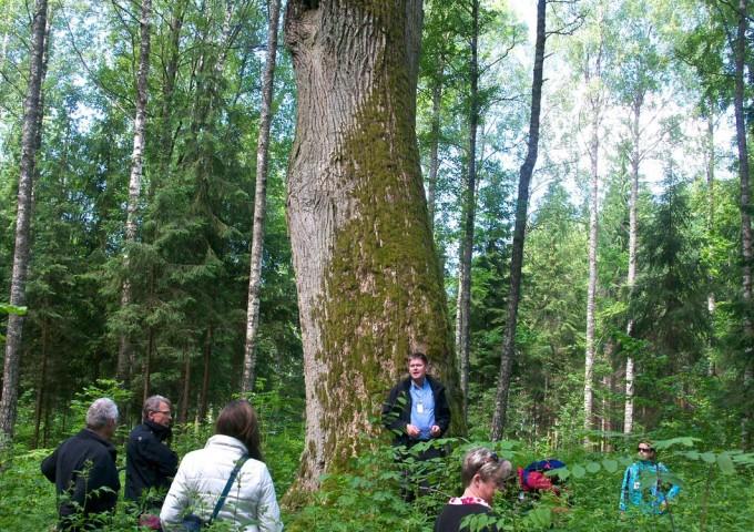 Villor vid fagelsjo eller bevarad urskog