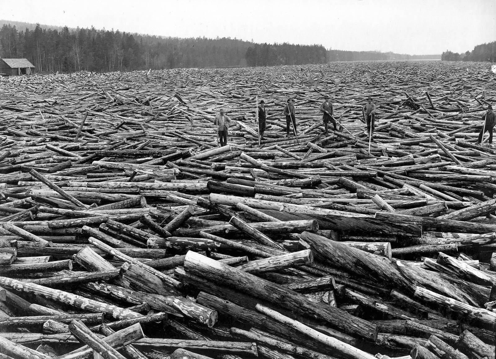 De flesta älvar var vid seklets början förvandlade till floder av virke Hållbommen i Sveg 1916. Ljusnans flottningsförenings arkiv.