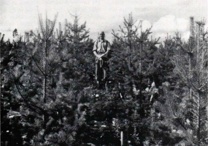 Gösta Liljeqvist 1951 i plantering efter bränning.