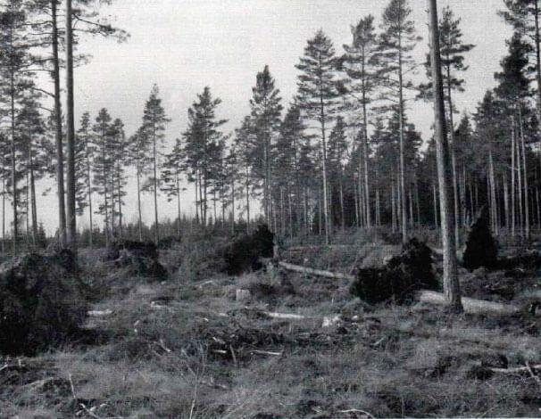 Stormfällningen 1954