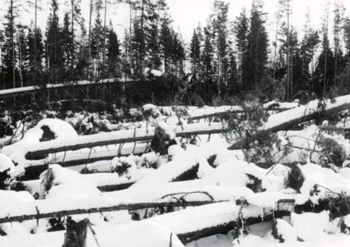 Stormfällningen 1954. Foto Åke Troedsson.