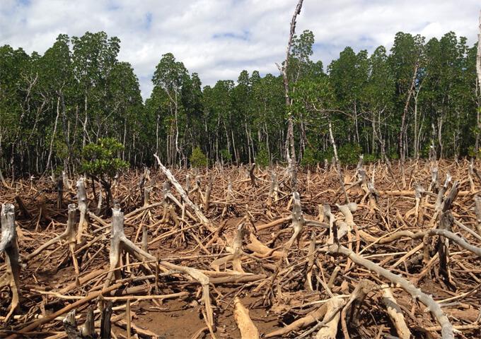Avskogning på Madagaskar. Foto cunningchrisw, Wikipedia commons.