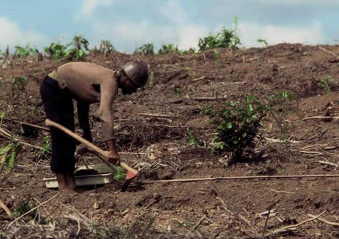 Plantering med SFI-hacka, Afrika.