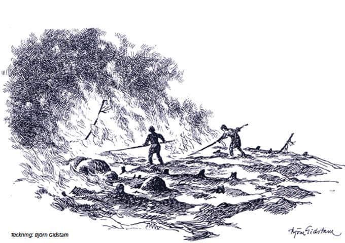 Svedjebruk, teckning Björn Widstam.