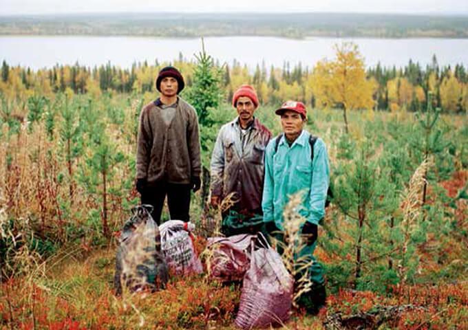 Thailändska bärplockare i Västerbotten 2010. Foto Margareta Klingberg.