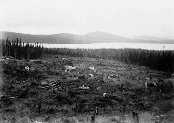 Kalhygge i Frostvikens revir 1917. Foto Skogsbiblioteket, SLU.
