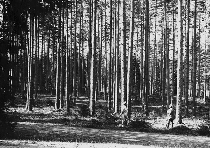 Tor Jonson och Anders Wahlgren på provyta nr 1, 1908.