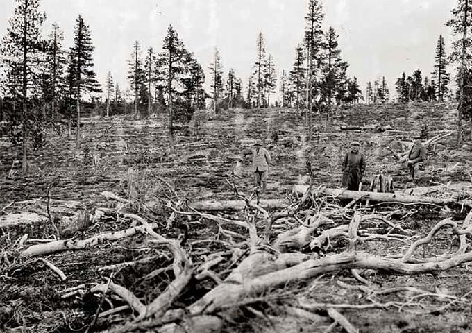 Exploaterande skogsbruk under tidigt 1900-tal. Foto Skogsbiblioteket, SLU.