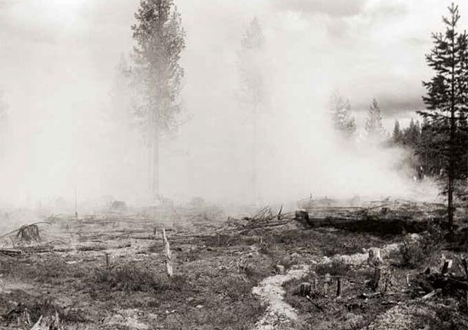 Hyggesbränning. Skogsbilder.