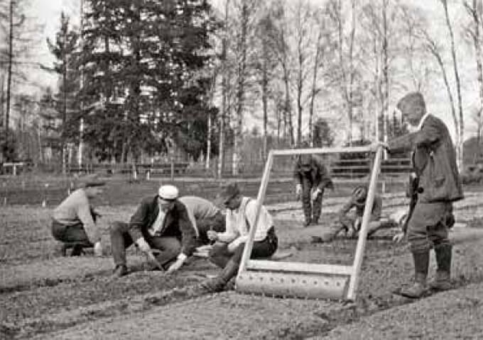 Omskolning av plantor i Bjurfors plantskola. Skogsbiblioteket, SLU: